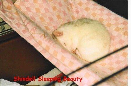 Shinnysleeps.jpg
